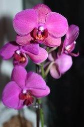 Орхидеи с доставкой на дом