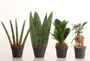 Мини-растения – стильные и необычные! Для дома и офиса!