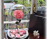 Уникальный подарок долговечная роза