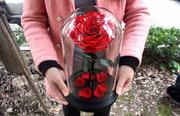 Роза в колбе вечная стабилизированная